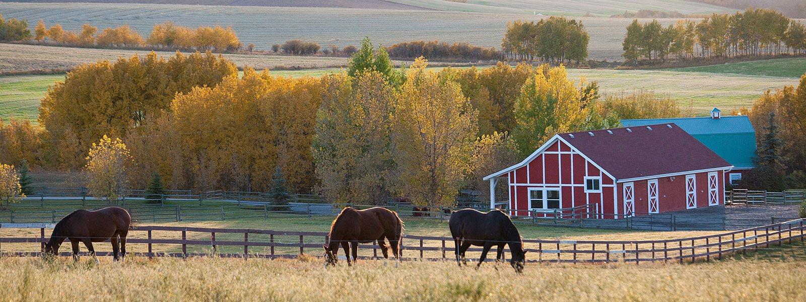 Horses and Barn