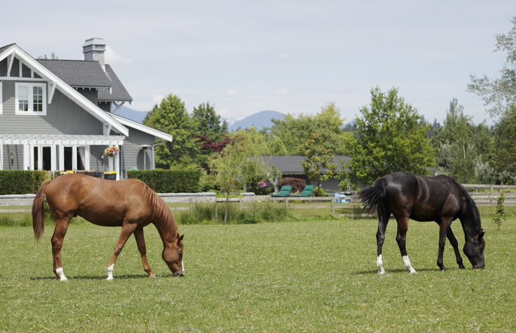 Horses grazing in a park